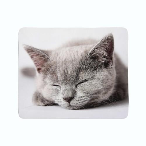 """Pledas """"Miegantis katinas"""""""