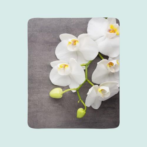 """Pledas """"Orchidėja"""""""